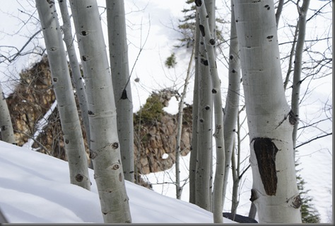 Awesome picture that Tara took of Aspens